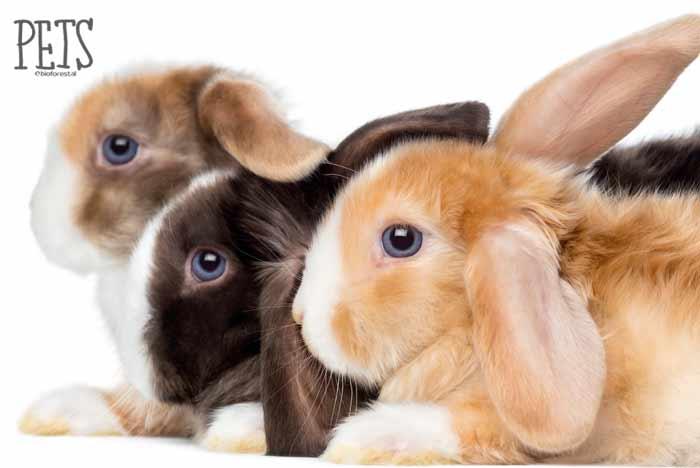 conejos toy