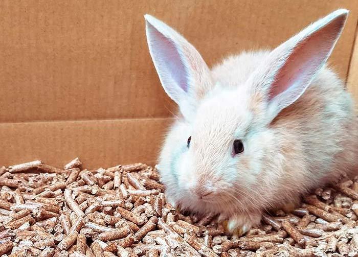 Conejo en un lecho de pellet