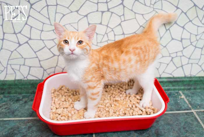 mejor arena pellets para gatos