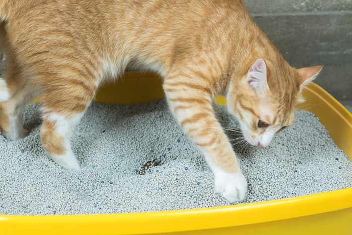 arena aglomerante gatos