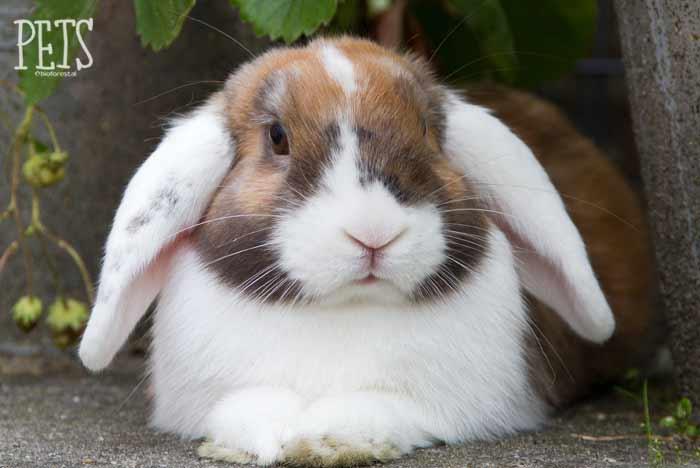 como jugar con conejo