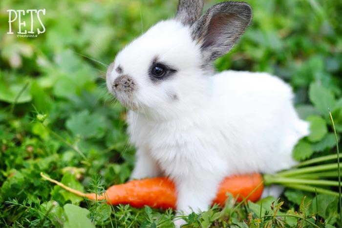 conejo y una zanahoria