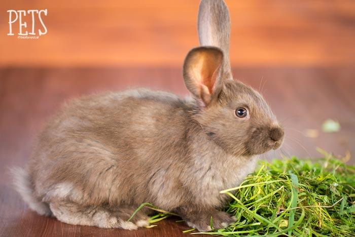 mi conejo estornuda por qué