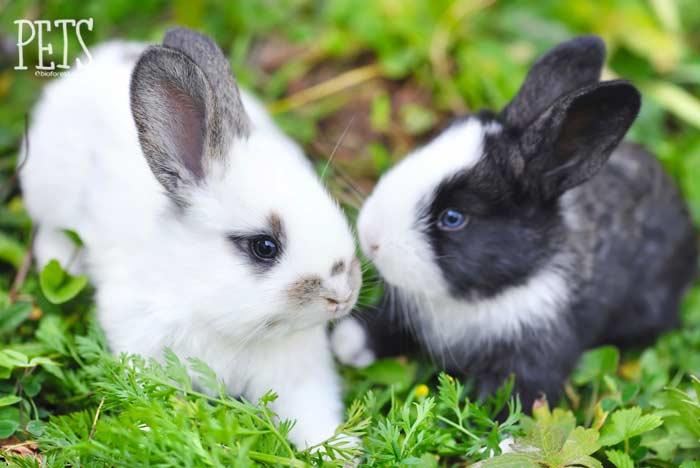 dos conejos estornudan