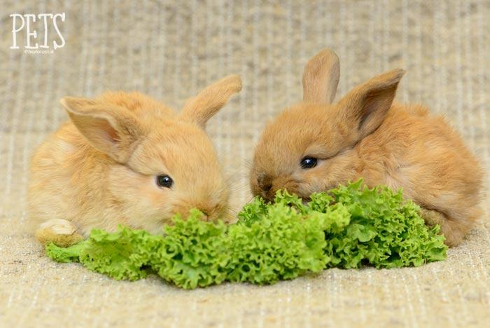 dos conejos bebe comiendo