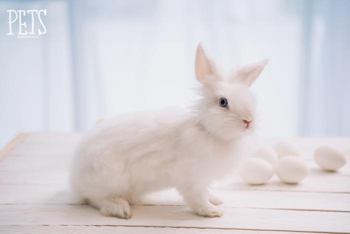 conejo blanco estornuda