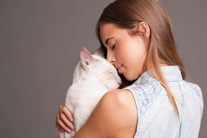 Por Qué Mi Gato Me Toca La Cara Pets Bioforestal