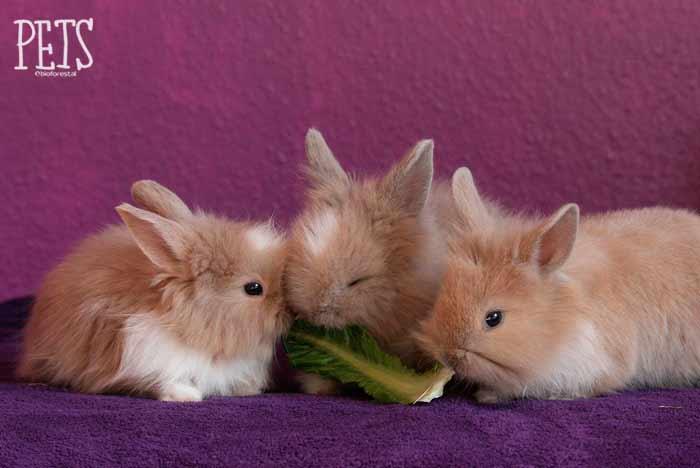 mi conejo no quiere comer por qué