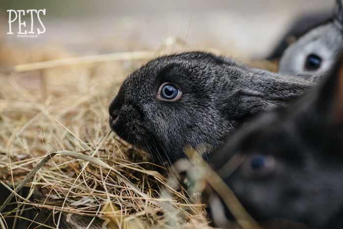 conejo no come heno