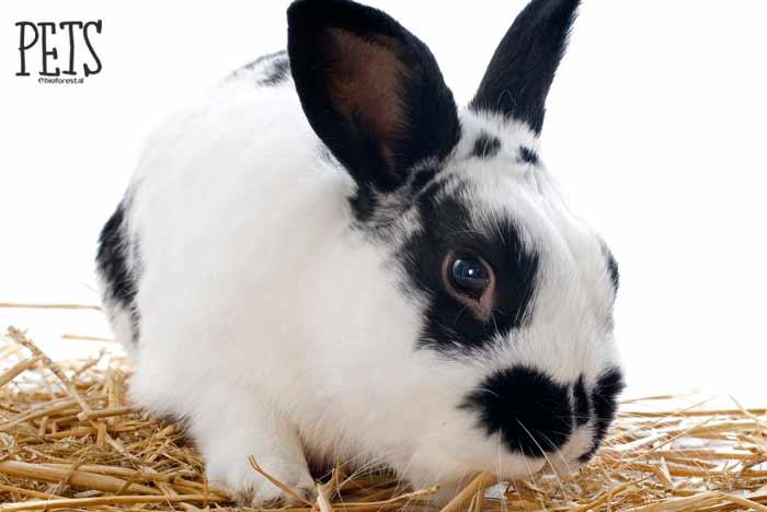 conejo blanco y negro que come heno