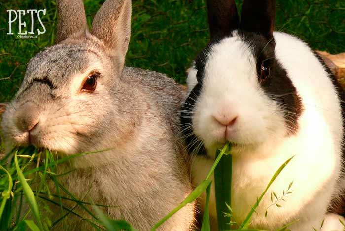 por qué no come un conejo